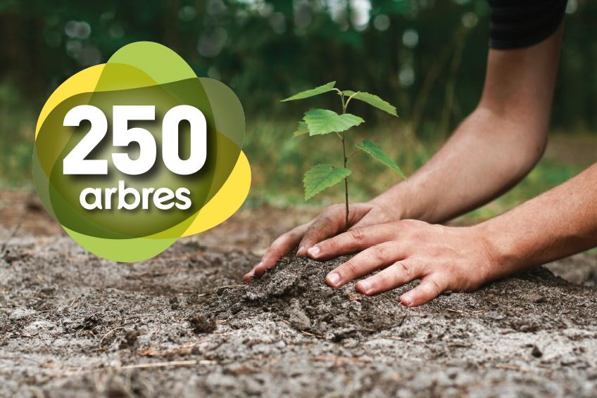 Campagne_250Arbres