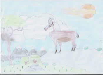 Dessin de Noé