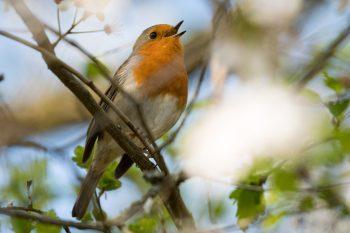 header_oiseaux
