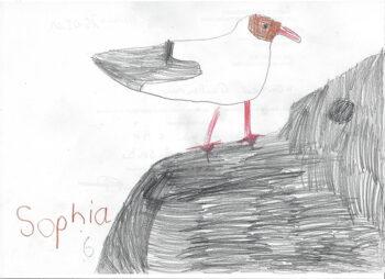 Dessin de Sophia