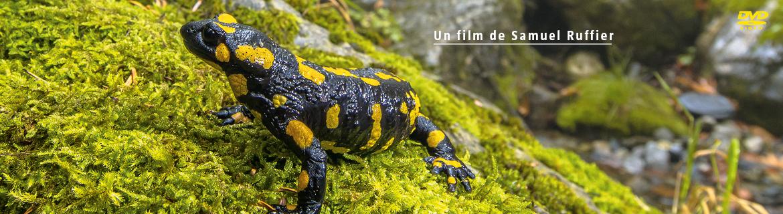 Le pari de la salamandre